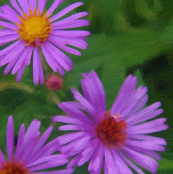 Flowers Study - detail - 600