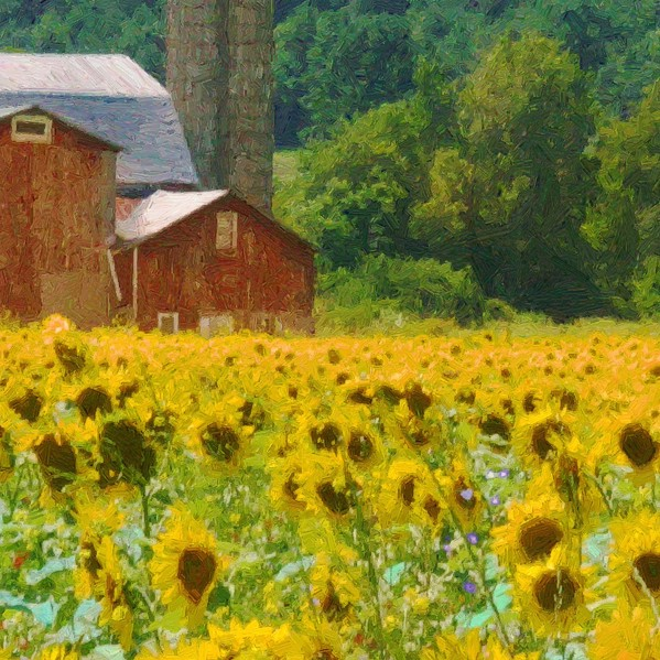 Sunflower Barn - detail - 600