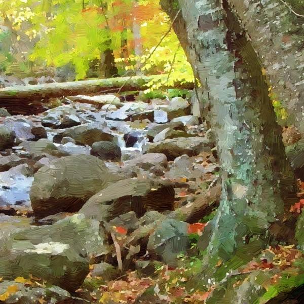 forest stream - detail - 600