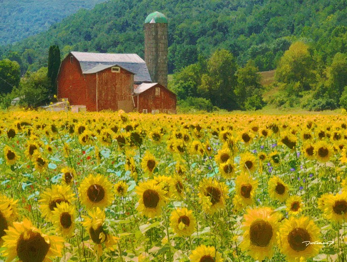 p8-0804 - Sunflower Barn - 0976 - art - wsig - 700