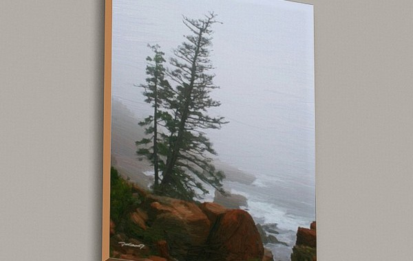 Tree and Ocean – Acadia
