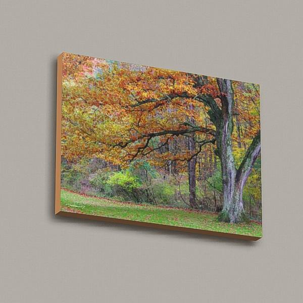 Autumn Old Oak