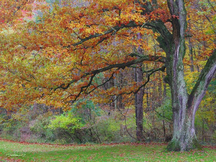 p6-1021 - Autumn Old Oak - 0307 - art - wsig - 700